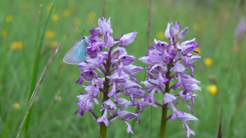 orchidees et papillons - Page 9 P1200310