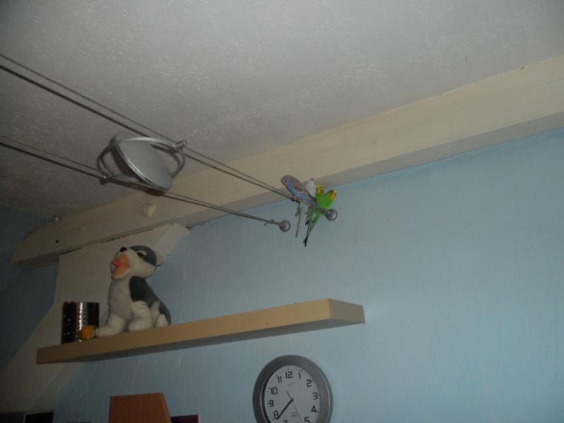Mes perruches ne siffle presque pas  Sam_0211
