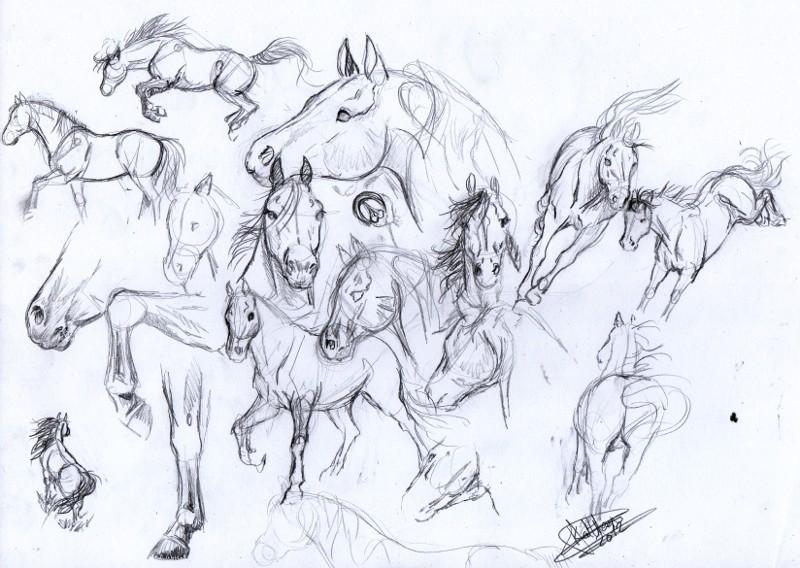 D butant m thode de construction pour dessiner un cheval - Dessin cheval de trait ...