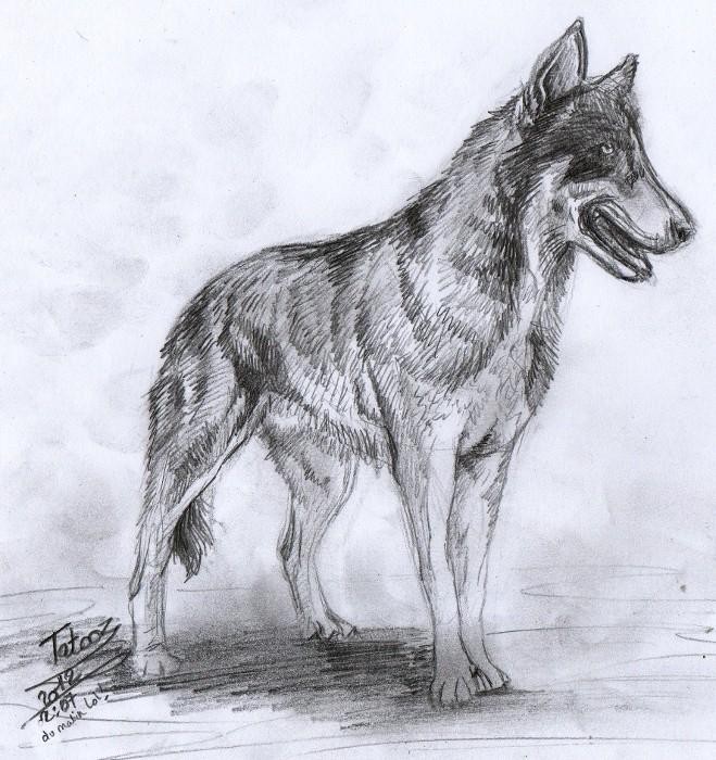 Le Jeu Du Duplicate La Beaute Des Loups