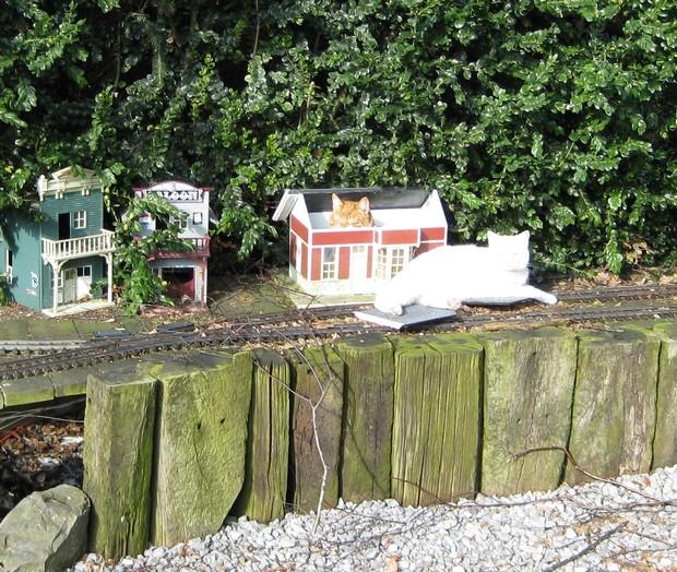 les Pelican Rail Road .. train de jardin en G Chat_g10