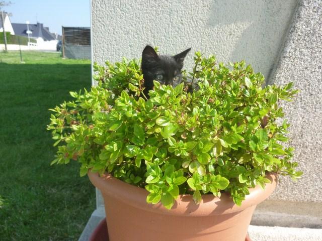 Hellia, chatonne noire née en avril 2012 Hellia14