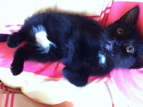 Hellia, chatonne noire née en avril 2012 Hellia15