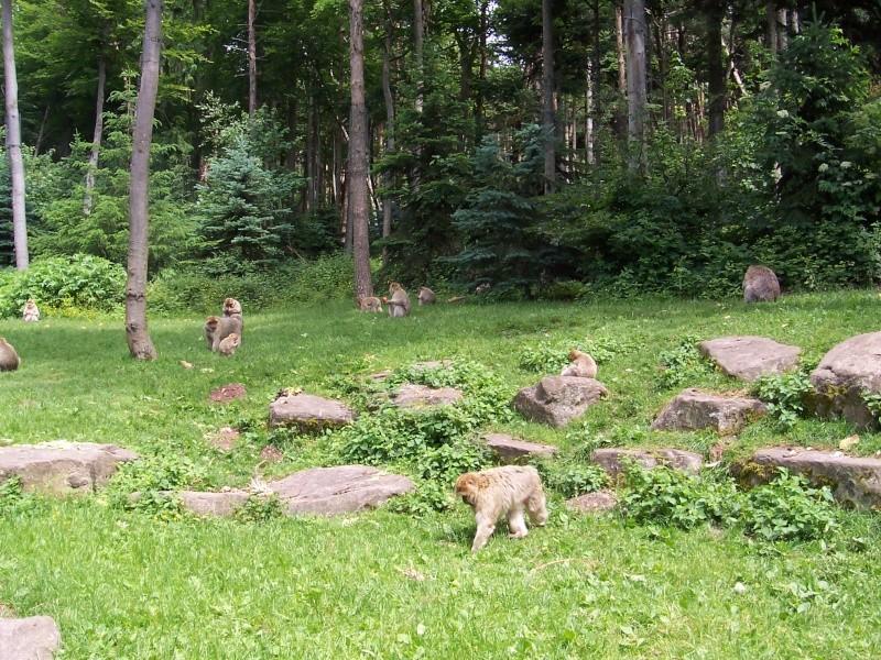 Quelles photos de mon mini-trip en Alsace Alsace34