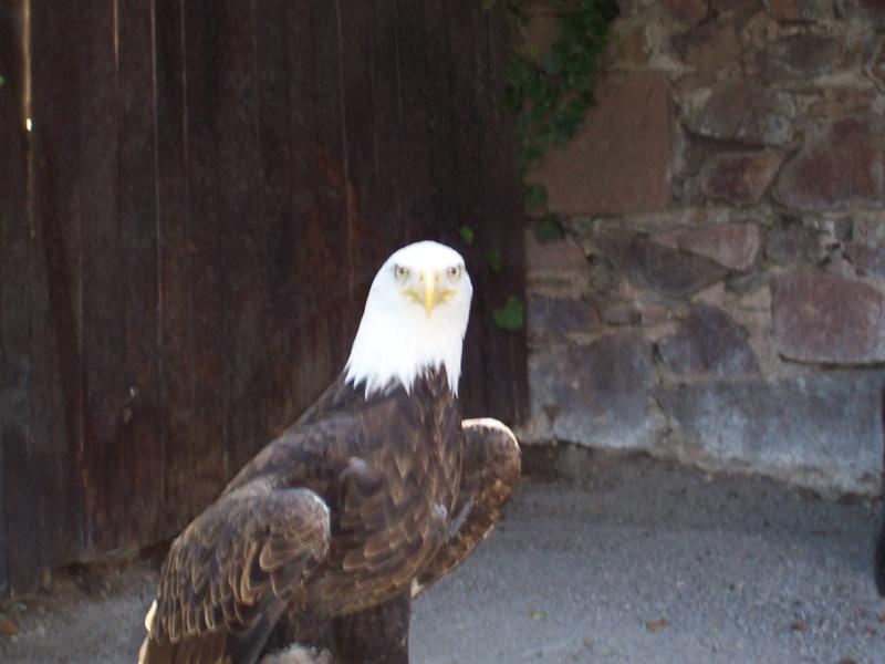 Quelles photos de mon mini-trip en Alsace - Page 2 Alsace40