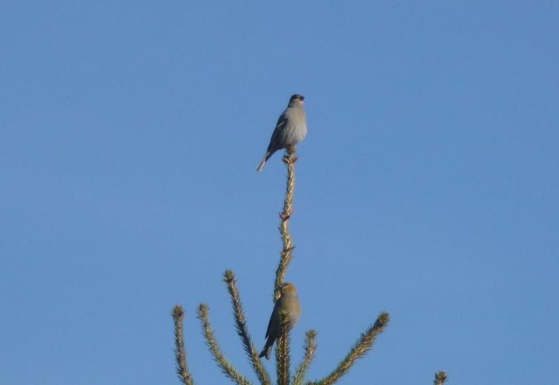 Oiseaux a identifier 2_ois10