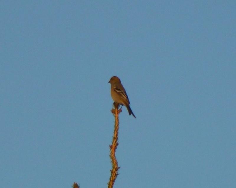 Oiseaux a identifier P1040211