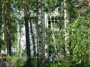 В поселке Березовый горел лес 16 мая B02f5d10