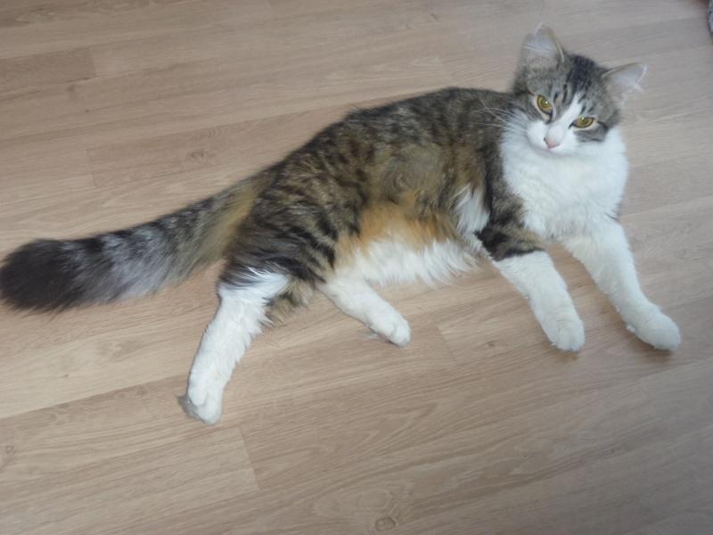 Ma Elfy. magnifique chat de 7 mois  Imgp0611