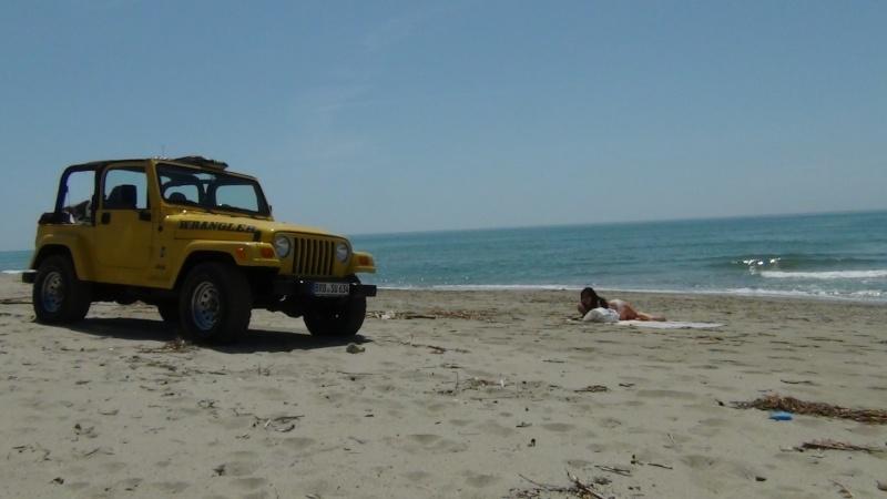 Surf Safari... 310