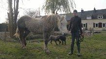 NOUCHKA - Percheron PP née en 2001 - adoptée en mars 2012 - Page 2 Nouchk13