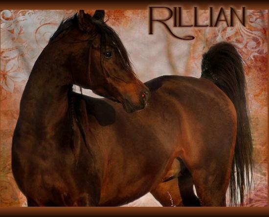 Les propositions Rillia10