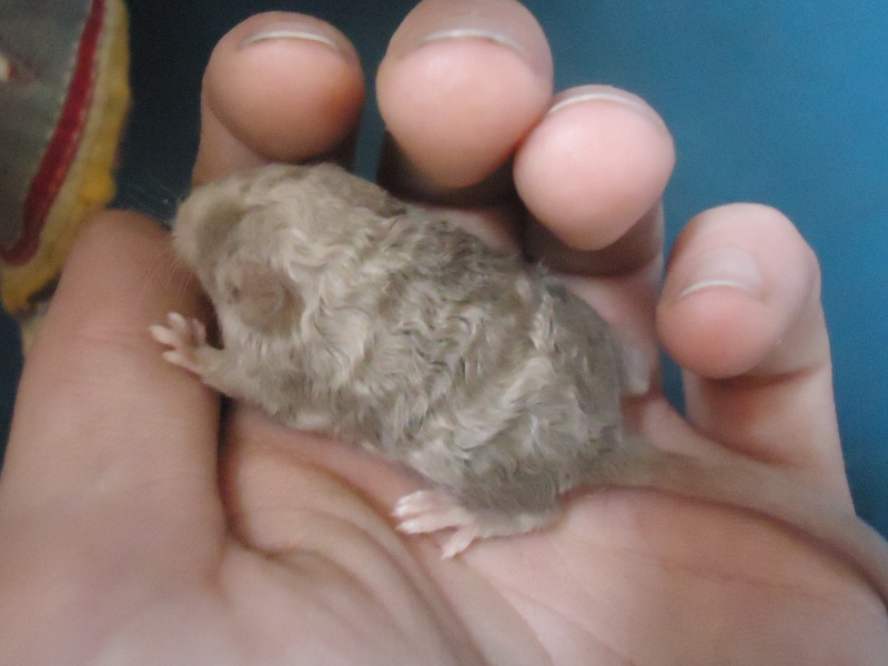 Mystery mice in my newest litter! Rich_i10