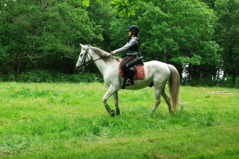 Cours d'équitation → Kermat ♥ 17969910