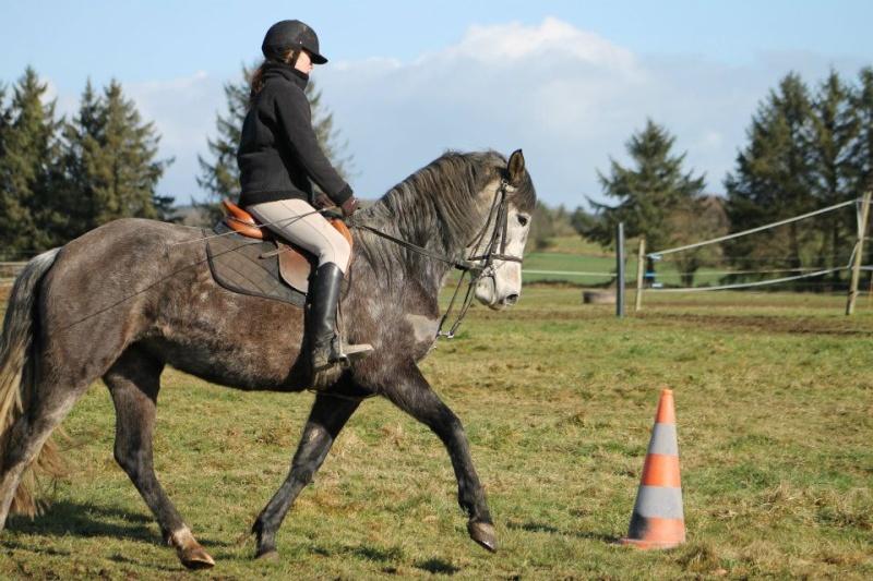 Cours d'équitation → Kermat ♥ - Page 2 40798910