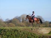 Cours d'équitation → Kermat ♥ - Page 3 41949510