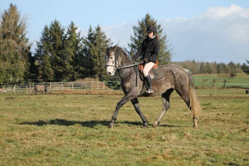 Cours d'équitation → Kermat ♥ - Page 2 43027810