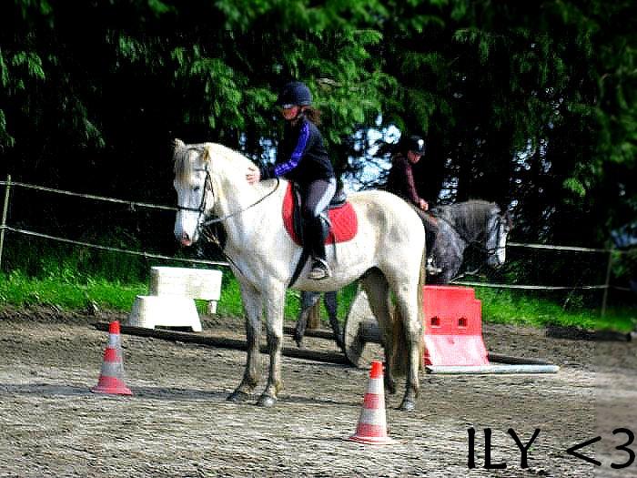 Cours d'équitation → Kermat ♥ - Page 2 Prip_813