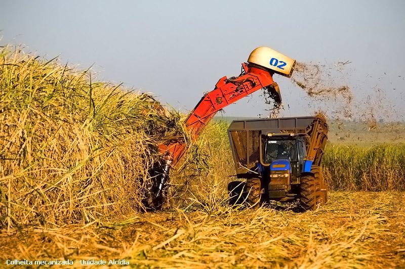 Cuba: i brasiliani di prepotenza nell'agricoltura Cubaca10