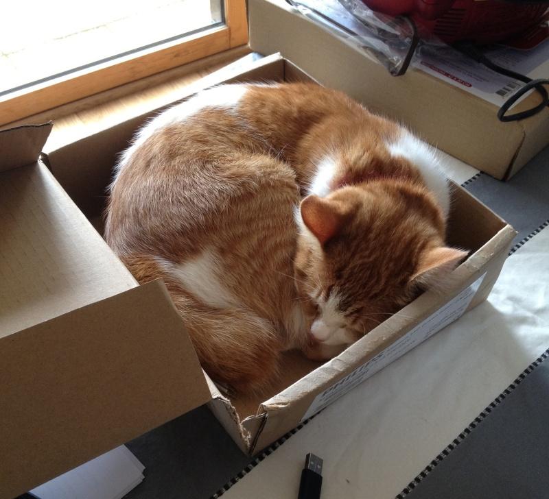 Gazou, chaton mâle roux et blanc , né vers le 20/11/2011 Img_0310