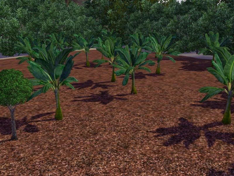 [Challenge sims 3] L'île Perdue Banane10