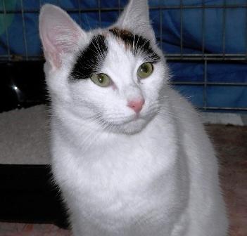 KITTY et MAYA - femelles nées en 01/2012 - GALIA Minett12