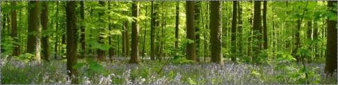 Le Reste de la Forêt