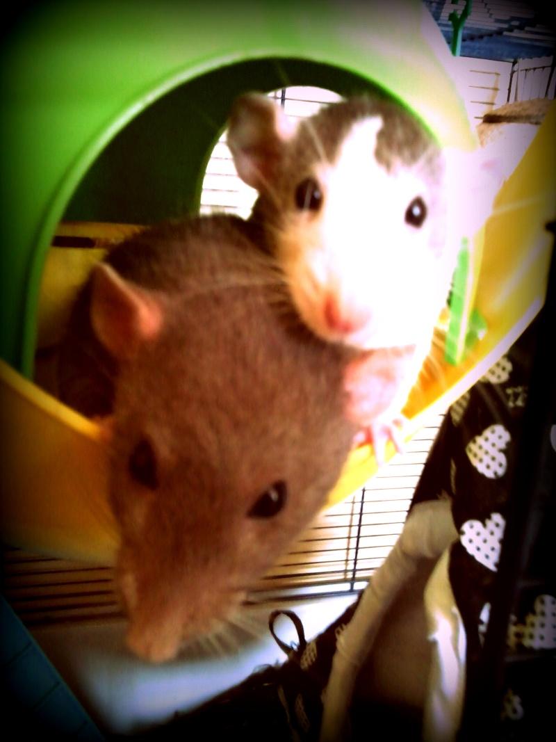 Cookie et Speedy, les ptits husky Photo010