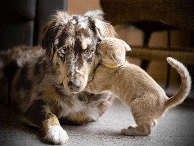 Chaque chien devrait avoir son chat... 1e10