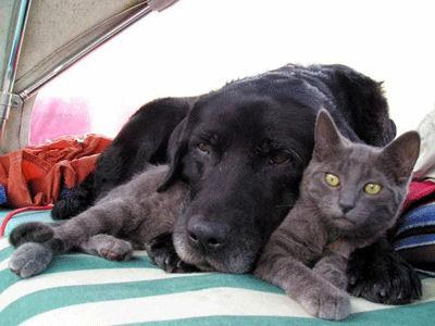 Chaque chien devrait avoir son chat... Be10