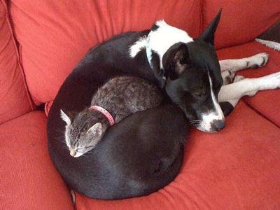 Chaque chien devrait avoir son chat... Bre10