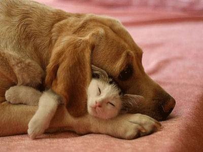 Chaque chien devrait avoir son chat... C10