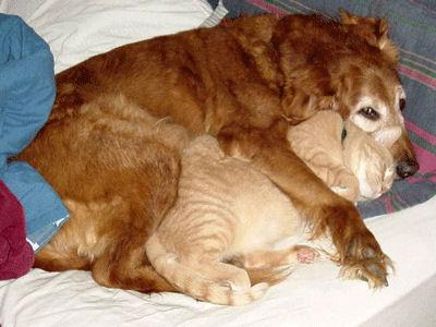 Chaque chien devrait avoir son chat... Cre10