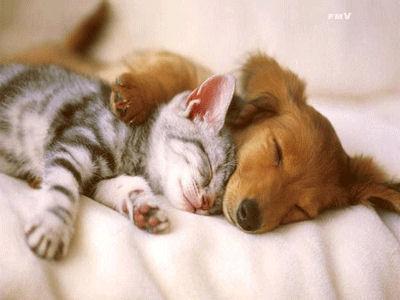 Chaque chien devrait avoir son chat... Dfe10