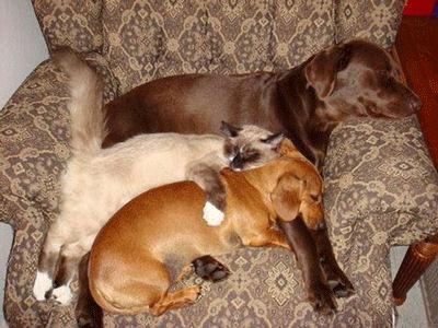 Chaque chien devrait avoir son chat... Dfre10