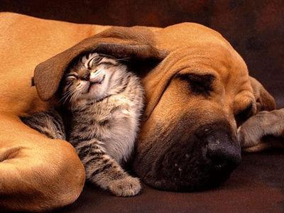 Chaque chien devrait avoir son chat... Fbnre10