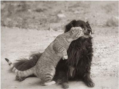 Chaque chien devrait avoir son chat... Kre10