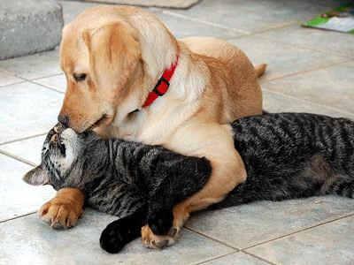 Chaque chien devrait avoir son chat... Sans-t10