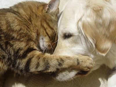 Chaque chien devrait avoir son chat... Ve10