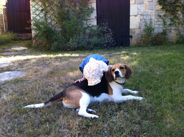 Cherche Famille pour adopter mon beagle Edgar de 3 ans et demi [ADOPTE] Img_3412