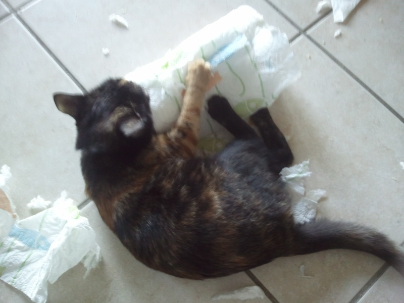 Des nouvelles de Luna (anciennement Hanaïs) Photo016