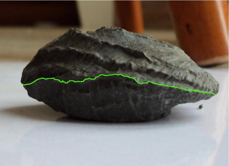 unusual brachiopod/bivalve found at Runswick Bay 21.10.12 can anyone identify? Valve_10