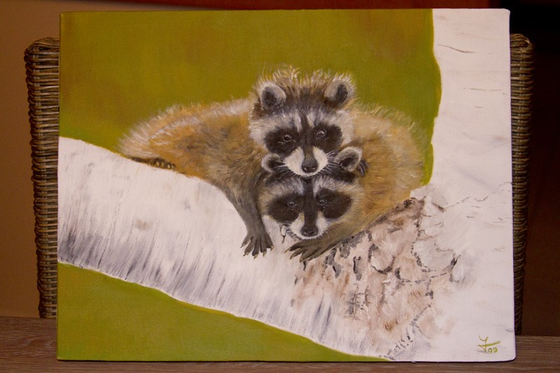Mes racoons Img_6013