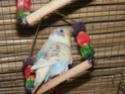 flocon et bonbon Dscf3213