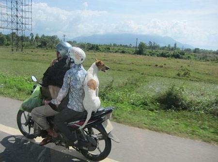 Cười đau bụng với những hình ảnh chỉ có tại ..Việt Nam 13513011