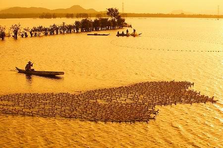 Những khoảnh khắc tuyệt đẹp trên đất Việt 13540610