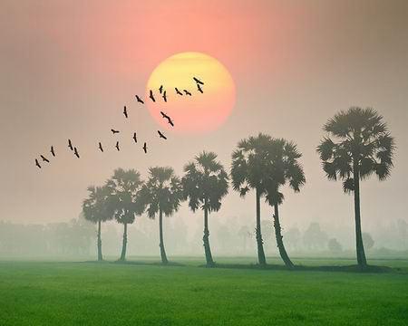 Những khoảnh khắc tuyệt đẹp trên đất Việt 13540618