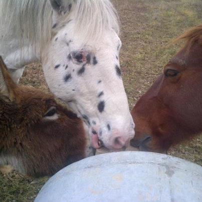 CALINOU  - ONC poney - né en 1999 - adopté en novembre 2012 par Stéphanie - Page 4 64399610