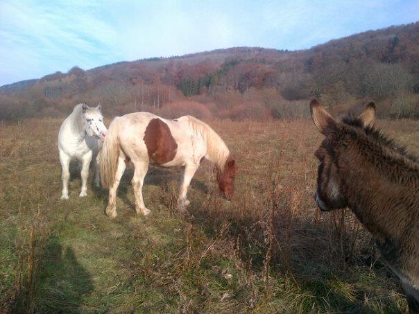 CALINOU  - ONC poney - né en 1999 - adopté en novembre 2012 par Stéphanie - Page 4 Calino14