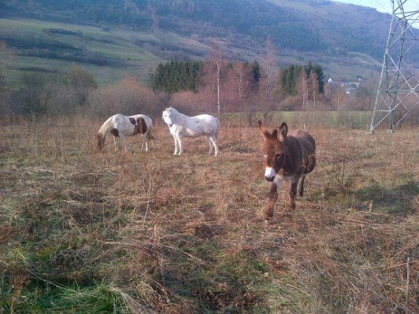 CALINOU  - ONC poney - né en 1999 - adopté en novembre 2012 par Stéphanie - Page 4 Calino15
